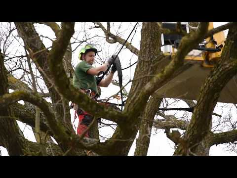 Baumkronensicherung in Schlierbach