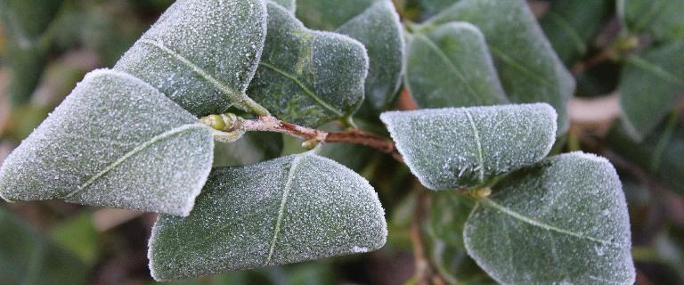 Pflanze bei Kälte
