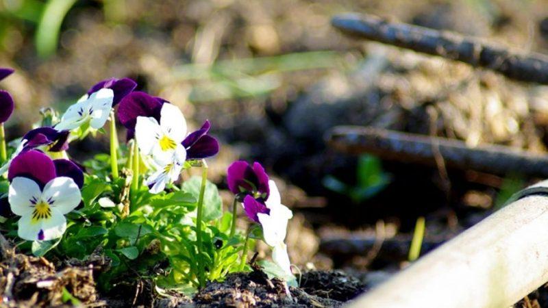 Pflanzen im Frühling - Gartentipps